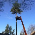Spokane Tree Service Hazard Tree Removal