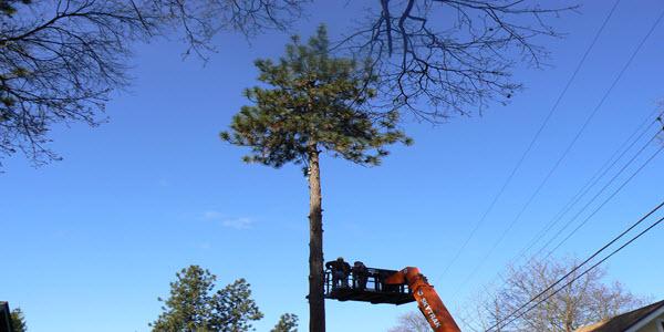 Hazard Tree Removal Spokane Tree Service Spokane Wa